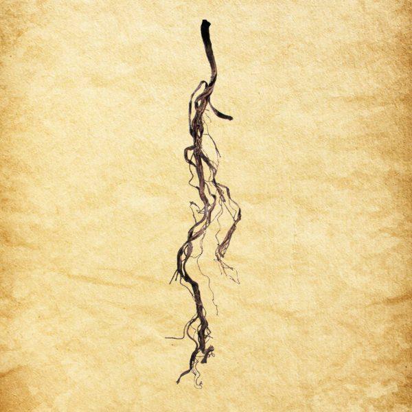Dead Twig Vine